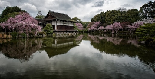 Cherry Blossoms, Heian Shrine, Kyoto, Japan - 2014